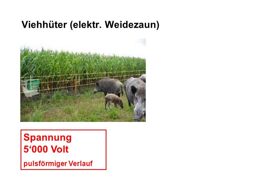 Viehhüter (elektr. Weidezaun) Spannung 5000 Volt pulsförmiger Verlauf