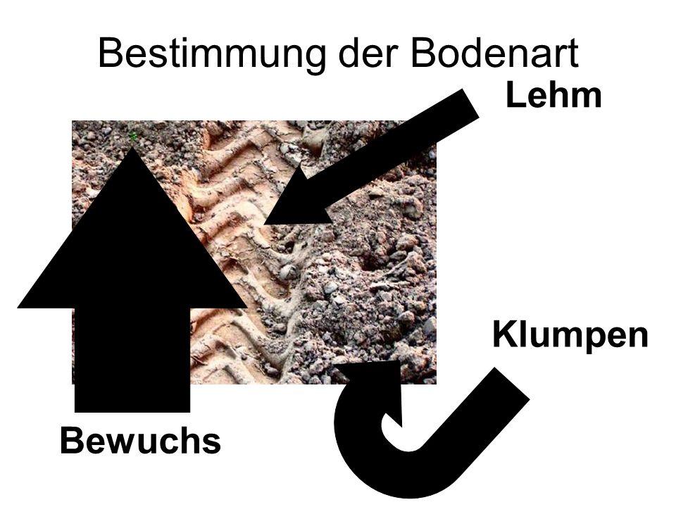 Bestimmung der Bodenart Lehm Klumpen Bewuchs