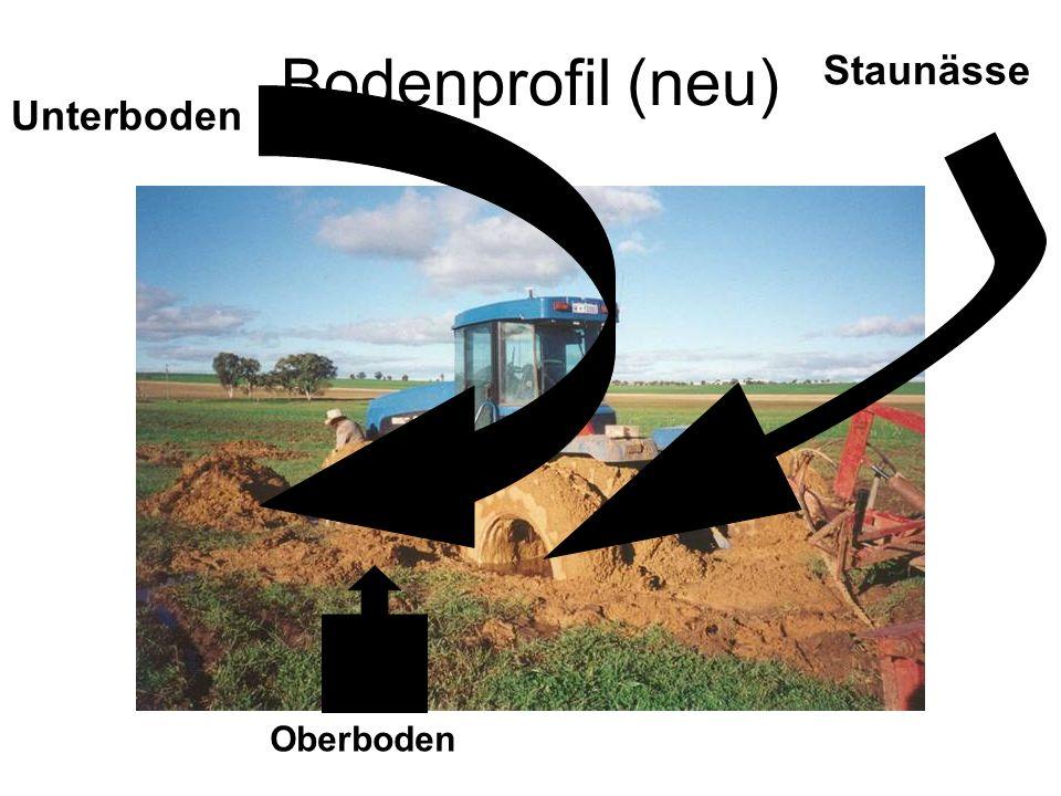 Bodenprofil (neu) Oberboden Staunässe Unterboden