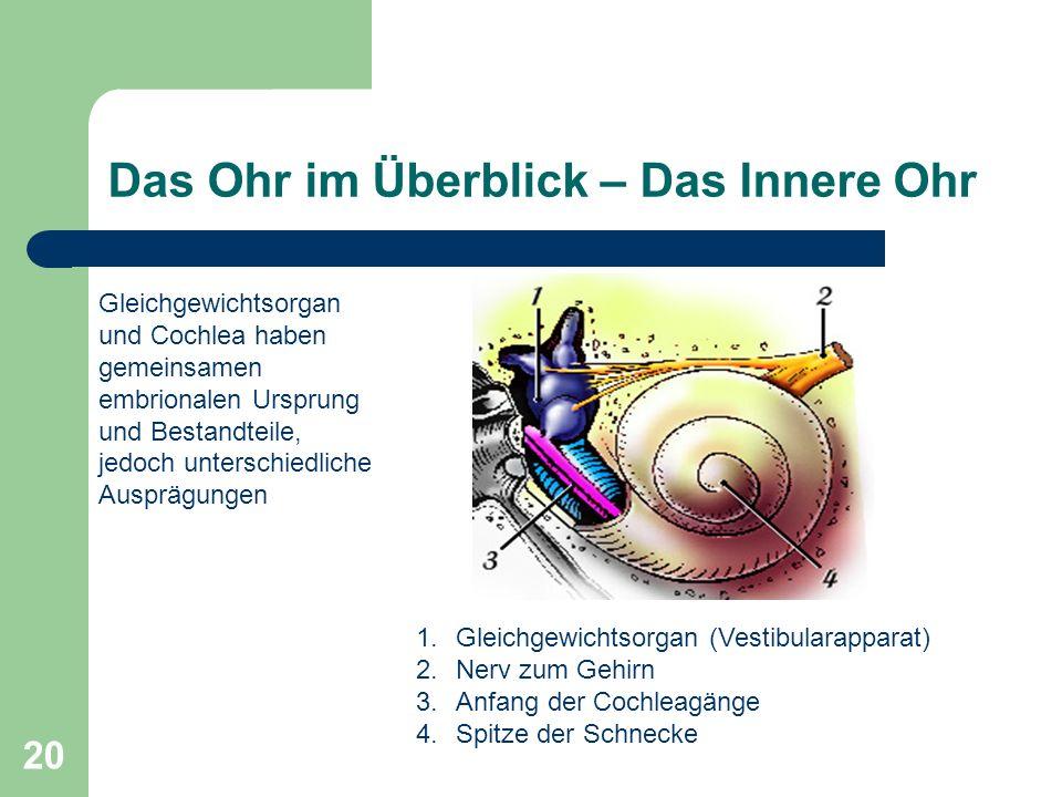 19 Die Mechanik des Mittelohrs Einfangen der Schallwellen am Trommelfell Wirkungsvolle Übertragung auf die Flüssigkeiten im Innenohr Verstärkung beson