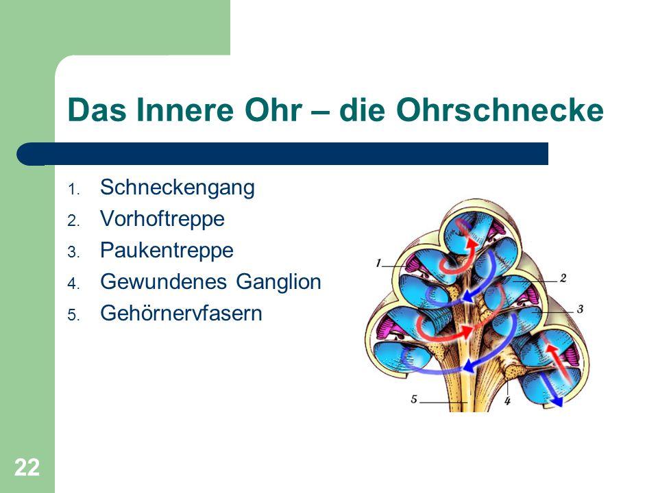 21 Das Innere Ohr – Der Vestibularapparat Aufgaben: Erfassung von Drehbewegung – In Erweiterungen der Bogengänge – Keine orthogonale Ausrichtung für b