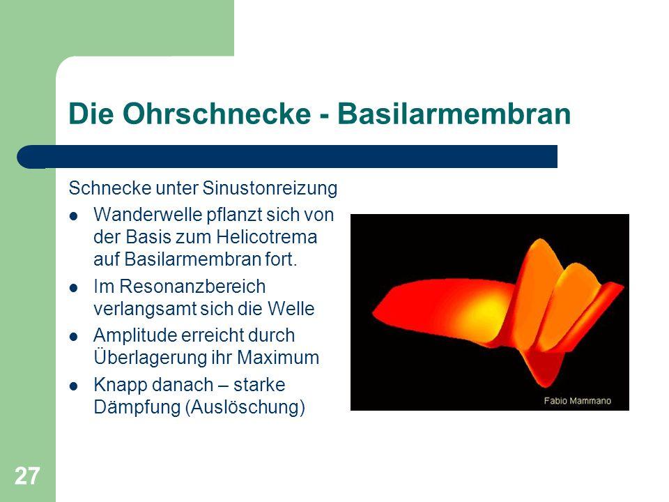26 Die Ohrschnecke - Basilarmembran Durch Steigbügel übertragene Vibrationen erzeugen Druckwelle bis hin zum Paukenfenster (Schallgeschwindigkeit des