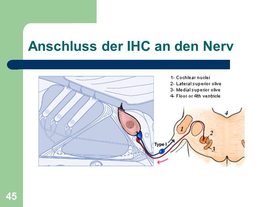44 Anschluss der Nervenfasern Neurotransmitter an den Synapsen: Glutamat