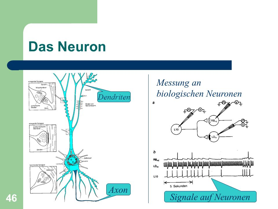 45 Anschluss der IHC an den Nerv