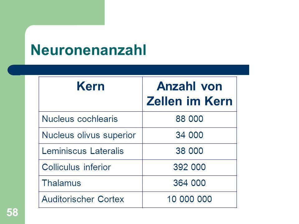 57 Der auditorische Pfad Drei Komponenten: Das auditorische Sinnesorgan Der Hörnerv Die auditorischen Gebiete im Gehirn