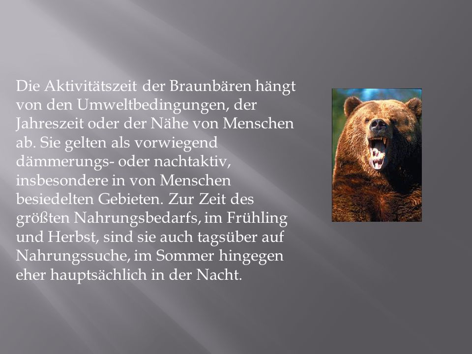 Die Aktivitätszeit der Braunbären hängt von den Umweltbedingungen, der Jahreszeit oder der Nähe von Menschen ab.