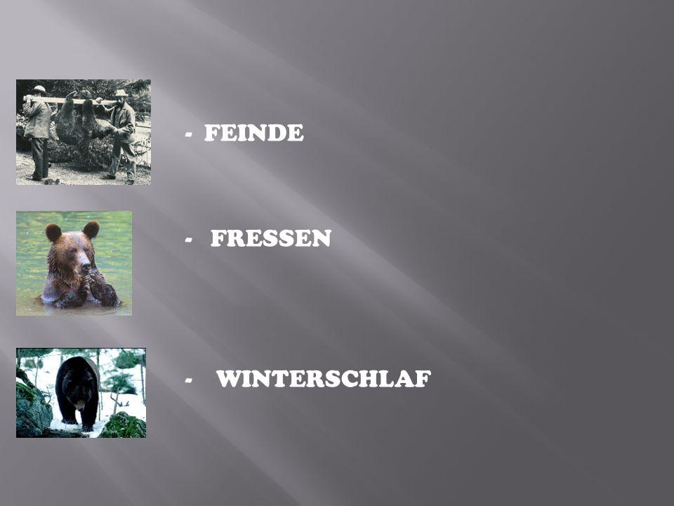 - FEINDE - FRESSEN - WINTERSCHLAF