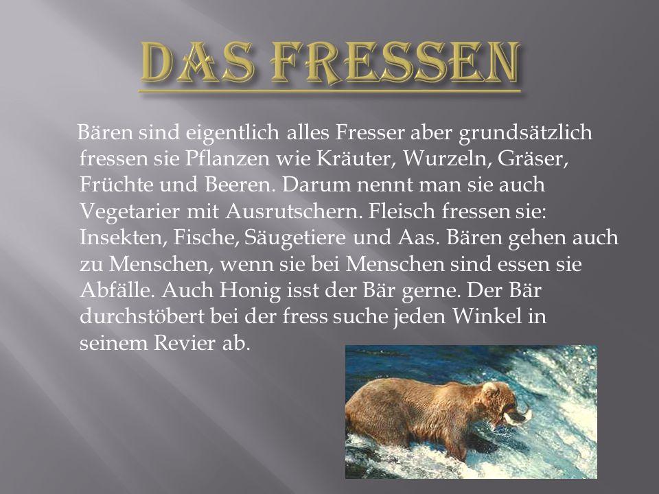 Bären sind eigentlich alles Fresser aber grundsätzlich fressen sie Pflanzen wie Kräuter, Wurzeln, Gräser, Früchte und Beeren.