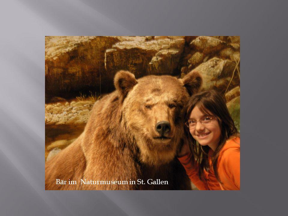 Bär im Naturmuseum in St. Gallen
