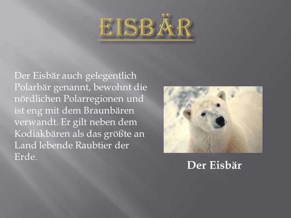 Der Eisbär Der Eisbär auch gelegentlich Polarbär genannt, bewohnt die nördlichen Polarregionen und ist eng mit dem Braunbären verwandt.