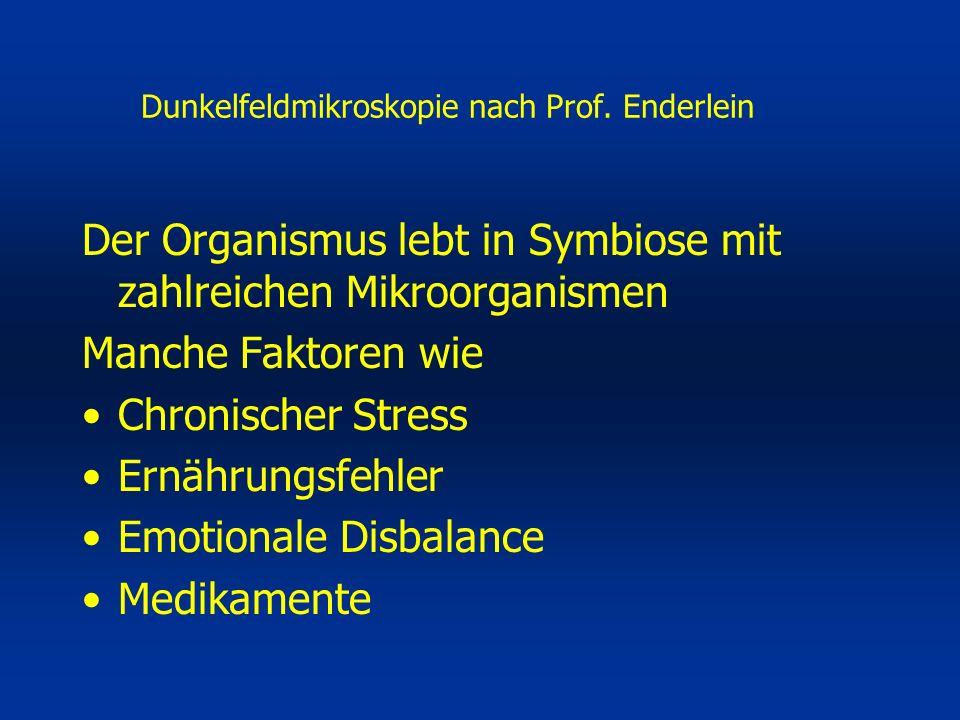 Dunkelfeldmikroskopie nach Prof.