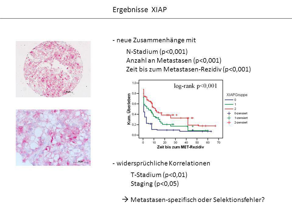 Ergebnisse XIAP - widersprüchliche Korrelationen T-Stadium (p<0,01) Staging (p<0,05) Metastasen-spezifisch oder Selektionsfehler? - neue Zusammenhänge