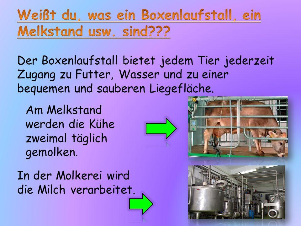 In einer Mischfutteranlage werden verschiedene Futtermittel gemischt.