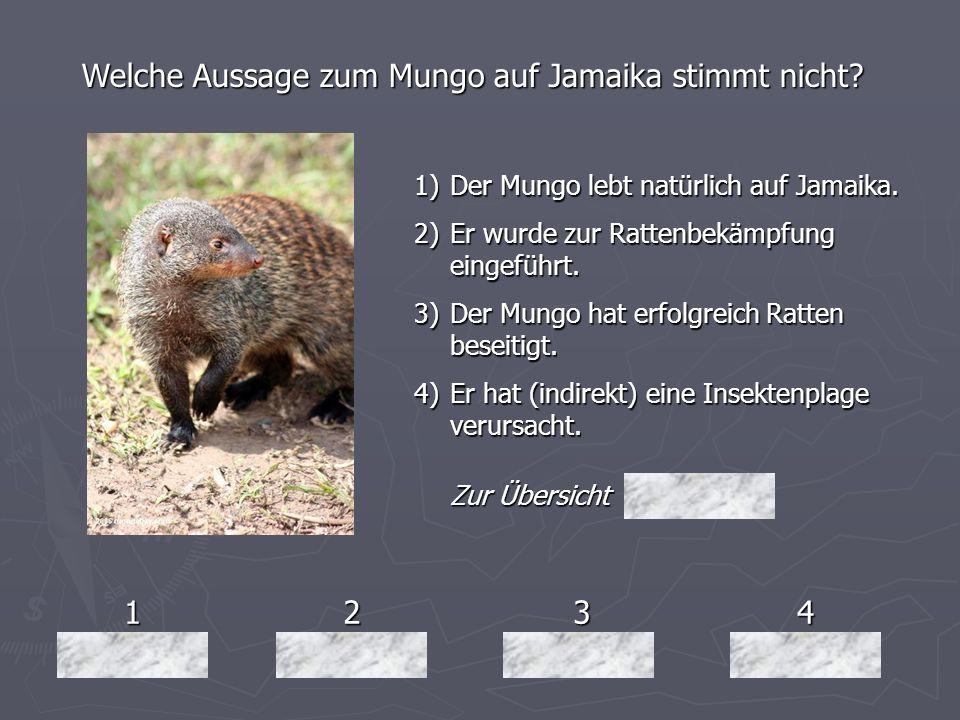 1234 Welche Aussage zum Mungo auf Jamaika stimmt nicht? 1)Der Mungo lebt natürlich auf Jamaika. 2)Er wurde zur Rattenbekämpfung eingeführt. 3)Der Mung