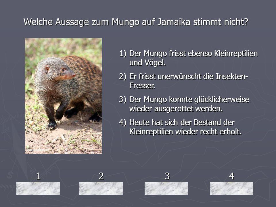 1234 Welche Aussage zum Mungo auf Jamaika stimmt nicht? 1)Der Mungo frisst ebenso Kleinreptilien und Vögel. 2)Er frisst unerwünscht die Insekten- Fres