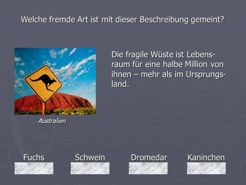 FuchsSchweinDromedarKaninchen Welche fremde Art ist mit dieser Beschreibung gemeint? Die fragile Wüste ist Lebens- raum für eine halbe Million von ihn