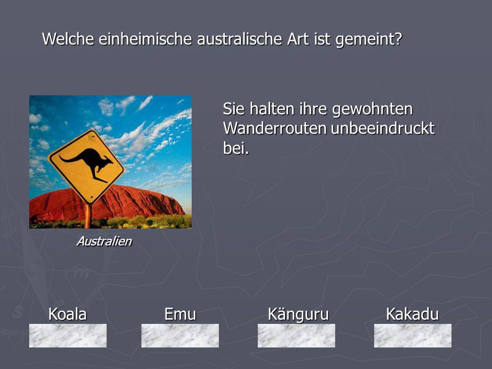 KoalaEmuKänguruKakadu Welche einheimische australische Art ist gemeint? Sie halten ihre gewohnten Wanderrouten unbeeindruckt bei. Australien