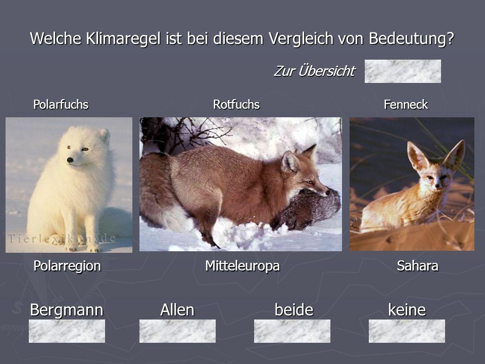 BergmannAllenbeidekeine Welche Klimaregel ist bei diesem Vergleich von Bedeutung? Polarregion Mitteleuropa Sahara Polarfuchs Rotfuchs Fenneck Zur Über