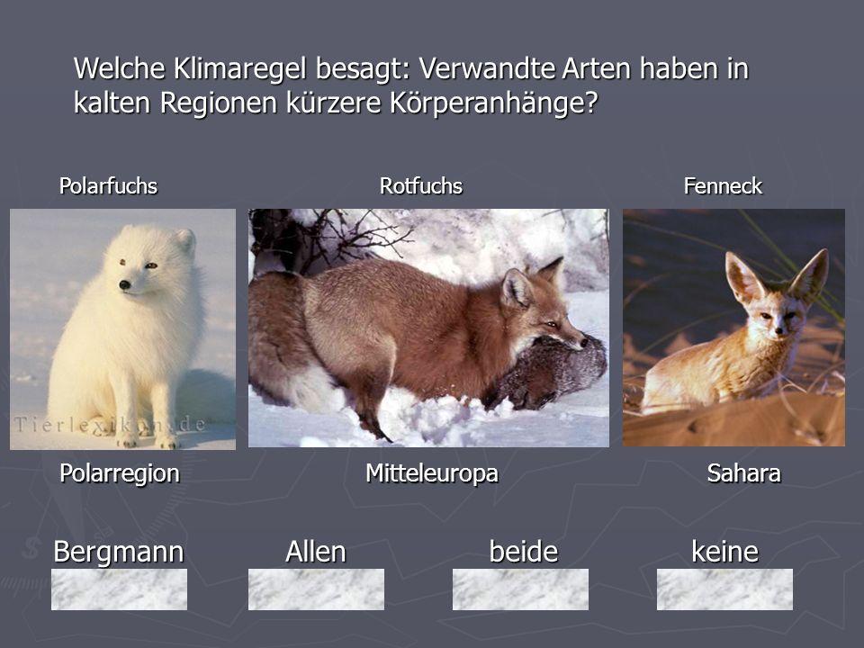 BergmannAllenbeidekeine Welche Klimaregel besagt: Verwandte Arten haben in kalten Regionen kürzere Körperanhänge? Polarregion Mitteleuropa Sahara Pola