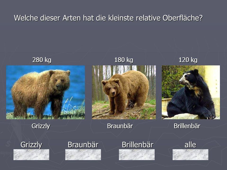 GrizzlyBraunbärBrillenbäralle 280 kg 180 kg 120 kg 280 kg 180 kg 120 kg Grizzly Braunbär Brillenbär Grizzly Braunbär Brillenbär Welche dieser Arten ha