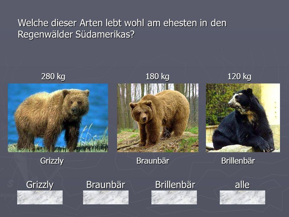 GrizzlyBraunbärBrillenbäralle 280 kg 180 kg 120 kg 280 kg 180 kg 120 kg Grizzly Braunbär Brillenbär Grizzly Braunbär Brillenbär Welche dieser Arten le