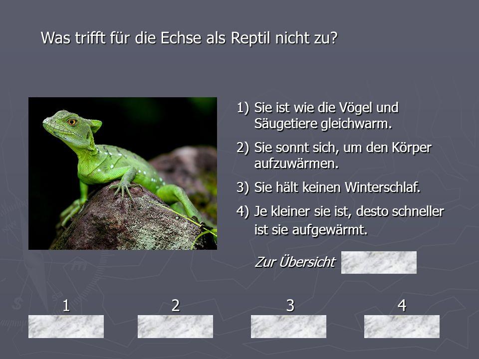 1234 Was trifft für die Echse als Reptil nicht zu? 1)Sie ist wie die Vögel und Säugetiere gleichwarm. 2)Sie sonnt sich, um den Körper aufzuwärmen. 3)S