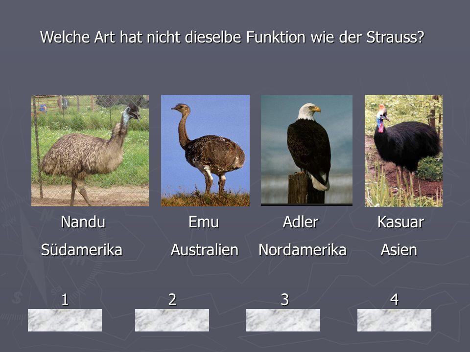 1234 Welche Art hat nicht dieselbe Funktion wie der Strauss? Nandu Emu Adler Kasuar Nandu Emu Adler Kasuar Südamerika Australien Nordamerika Asien Süd