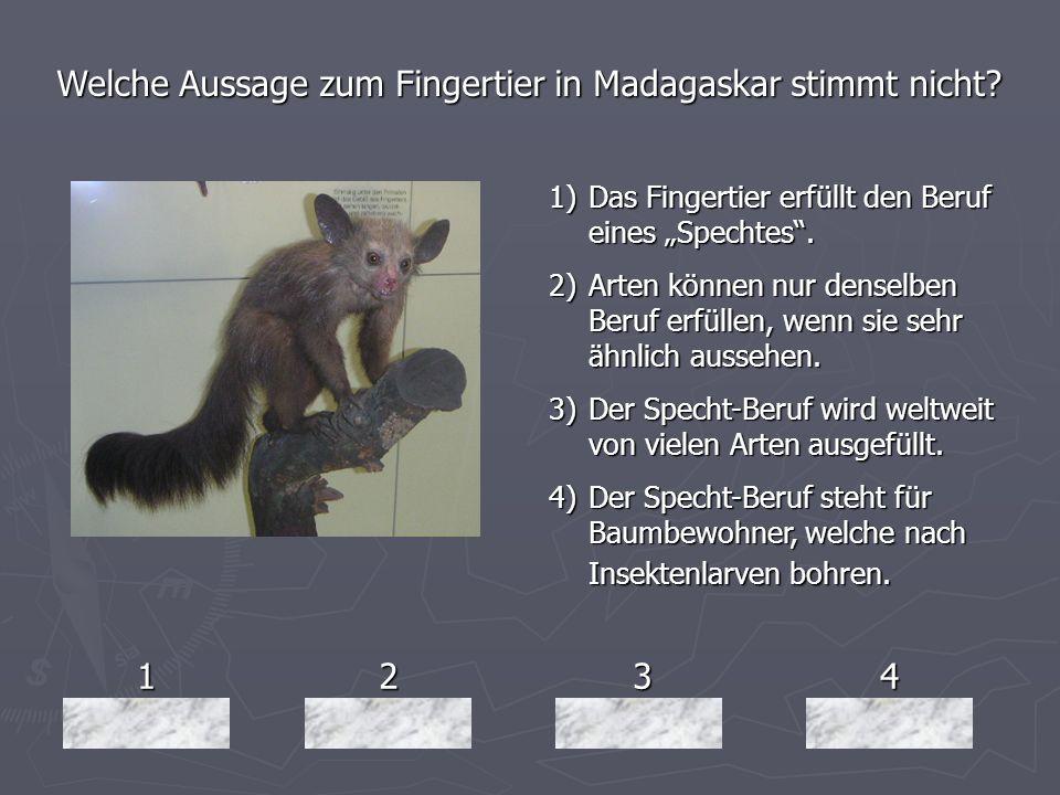 1234 Welche Aussage zum Fingertier in Madagaskar stimmt nicht? 1)Das Fingertier erfüllt den Beruf eines Spechtes. 2)Arten können nur denselben Beruf e
