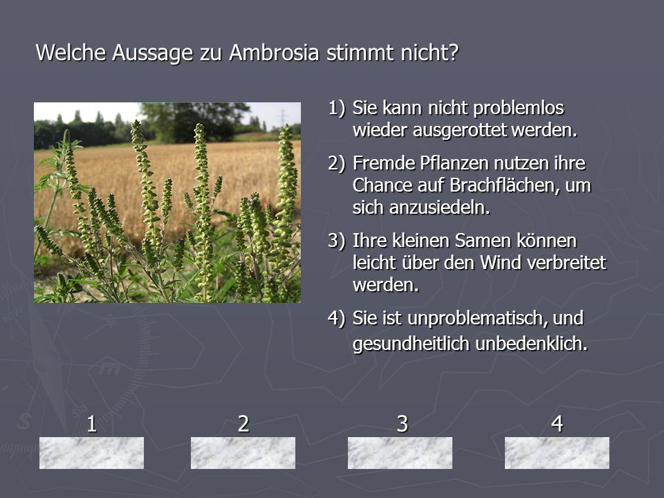 1234 Welche Aussage zu Ambrosia stimmt nicht? 1)Sie kann nicht problemlos wieder ausgerottet werden. 2)Fremde Pflanzen nutzen ihre Chance auf Brachflä