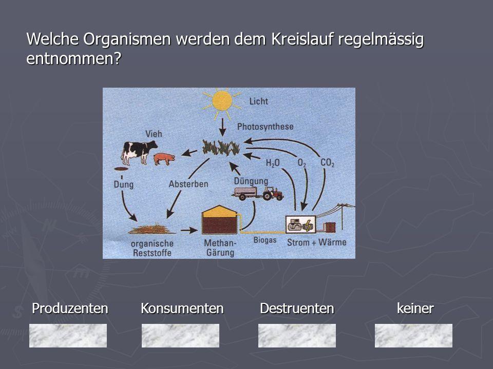 Produzenten Welche Organismen werden dem Kreislauf regelmässig entnommen? keiner Destruenten DestruentenKonsumenten