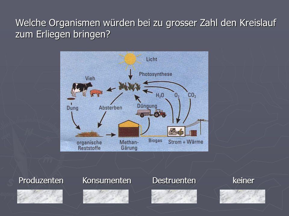 Produzenten Welche Organismen würden bei zu grosser Zahl den Kreislauf zum Erliegen bringen? keiner Destruenten DestruentenKonsumenten