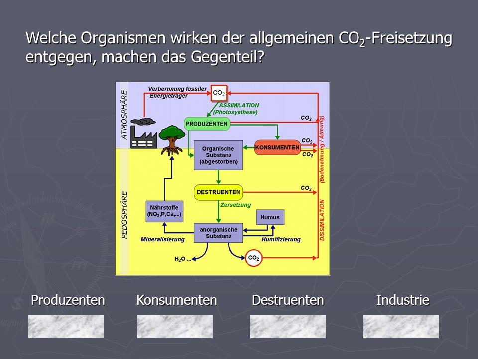 Produzenten Welche Organismen wirken der allgemeinen CO 2 -Freisetzung entgegen, machen das Gegenteil? Industrie Destruenten DestruentenKonsumenten
