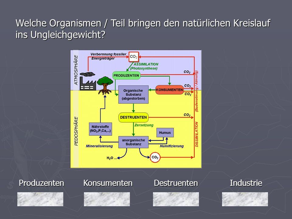 Produzenten Welche Organismen / Teil bringen den natürlichen Kreislauf ins Ungleichgewicht? Industrie Destruenten DestruentenKonsumenten