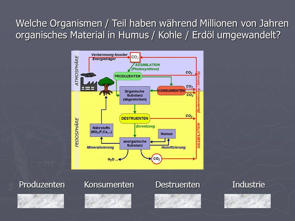 Produzenten Welche Organismen / Teil haben während Millionen von Jahren organisches Material in Humus / Kohle / Erdöl umgewandelt? Industrie Destruent