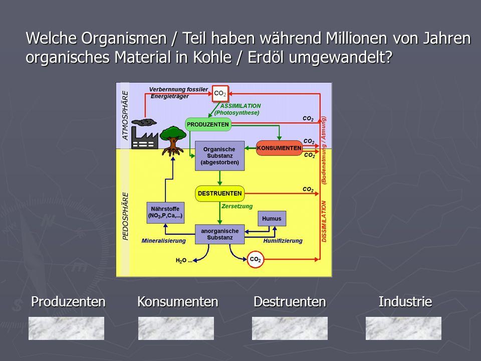 Produzenten Welche Organismen / Teil haben während Millionen von Jahren organisches Material in Kohle / Erdöl umgewandelt? Industrie Destruenten Destr
