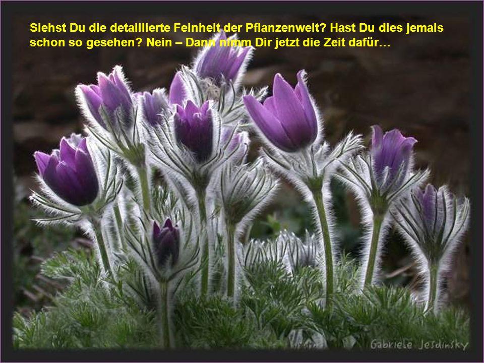 Siehst Du die detaillierte Feinheit der Pflanzenwelt? Hast Du dies jemals schon so gesehen? Nein – Dann nimm Dir jetzt die Zeit dafür…