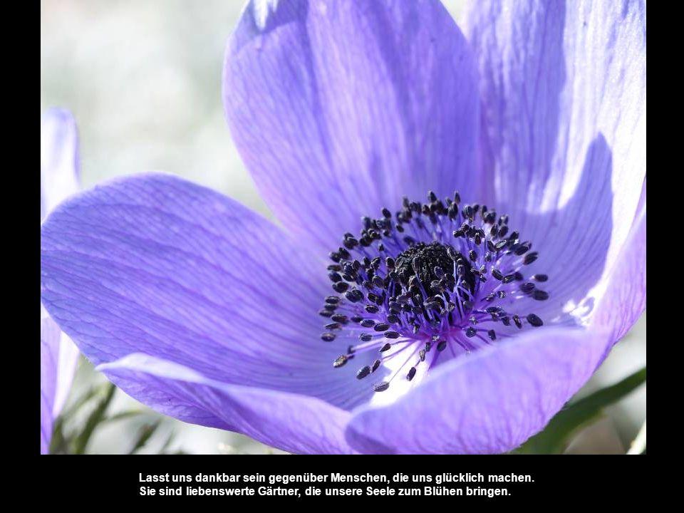 Lasst uns dankbar sein gegenüber Menschen, die uns glücklich machen. Sie sind liebenswerte Gärtner, die unsere Seele zum Blühen bringen.