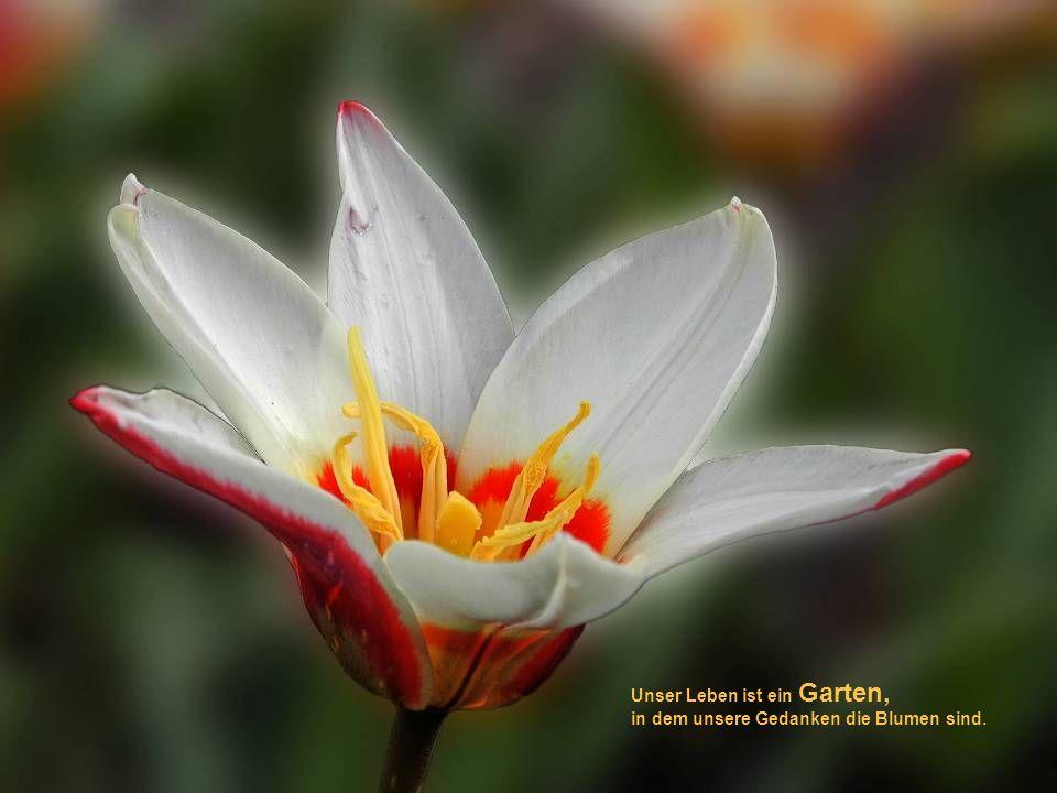 Unser Leben ist ein Garten, in dem unsere Gedanken die Blumen sind.