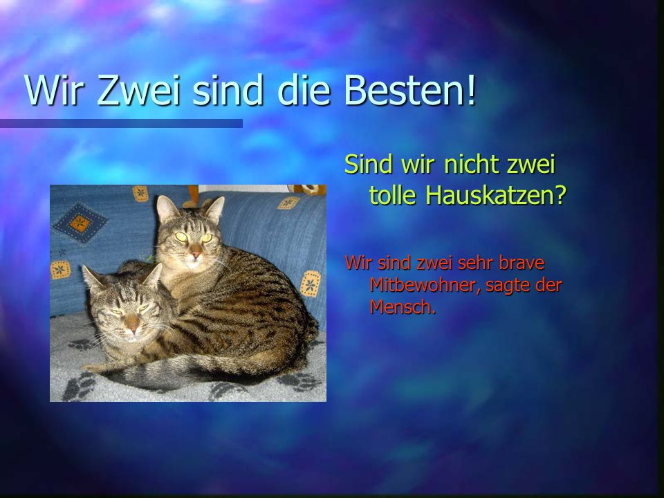 Wir Zwei sind die Besten! Sind wir nicht zwei tolle Hauskatzen? Wir sind zwei sehr brave Mitbewohner, sagte der Mensch.