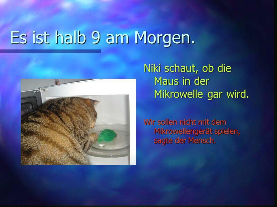 Es ist halb 9 am Morgen.Niki schaut, ob die Maus in der Mikrowelle gar wird.
