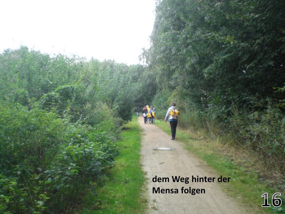 dem Weg hinter der Mensa folgen