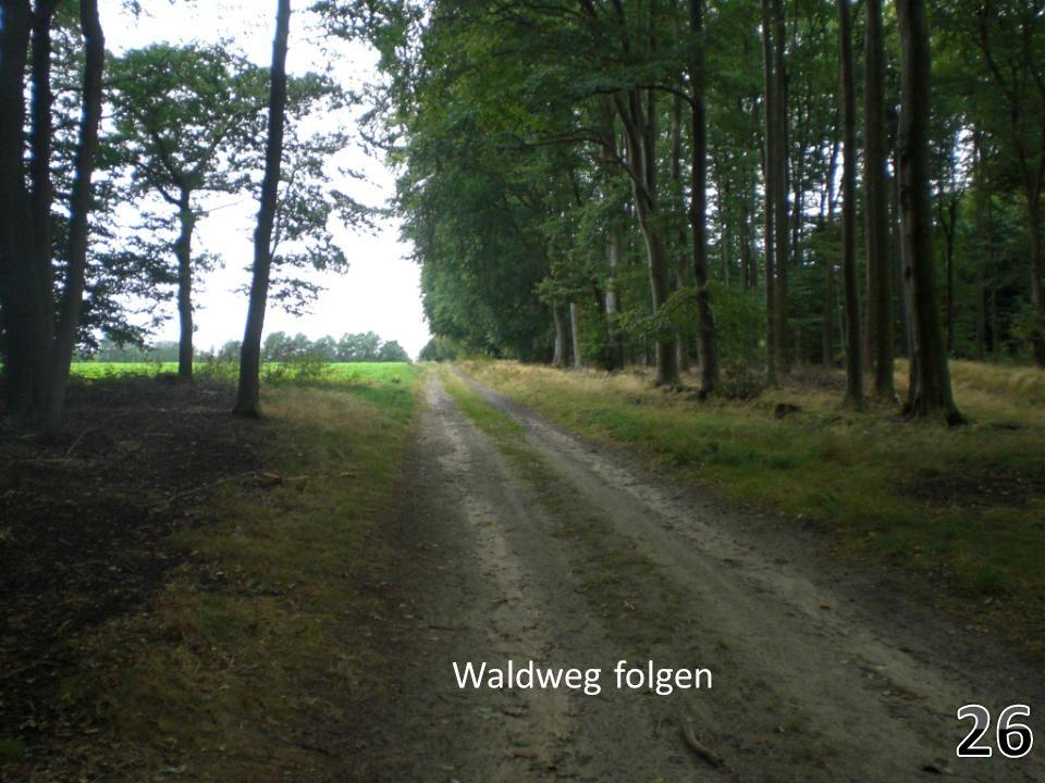 Durch den Wald gehen- banous bilder Waldweg folgen