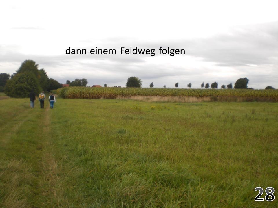 dann einem Feldweg folgen