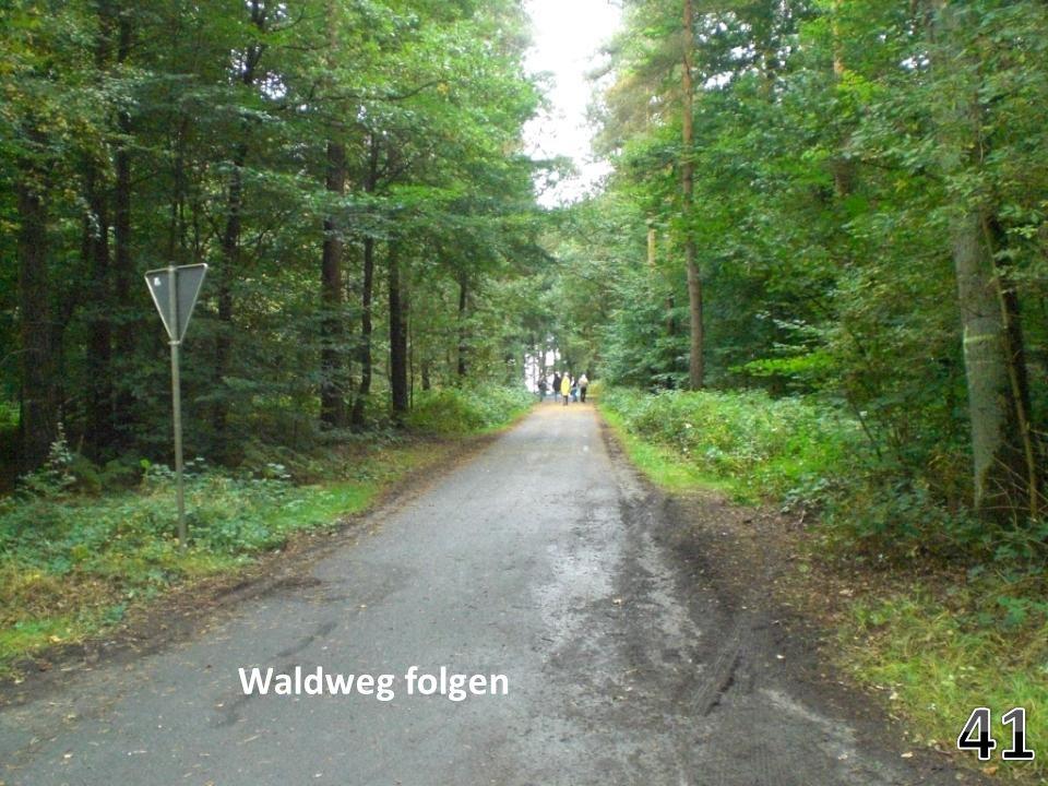 Waldweg folgen