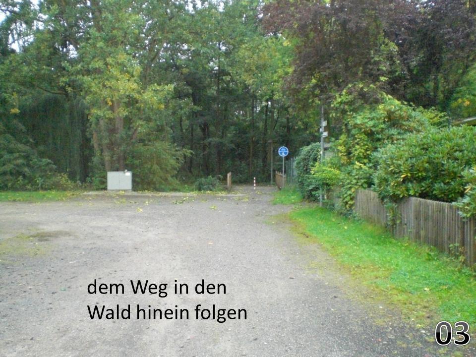 der Kurve aus dem Wald in die Siedlung folgen