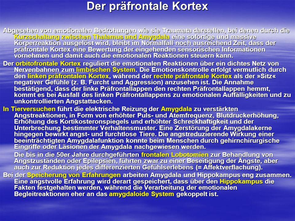 Der präfrontale Kortex Abgesehen von emotionalen Bedrohungen wie sie Traumata darstellen, bei denen durch die Kurzschaltung zwischen Thalamus und Amyg