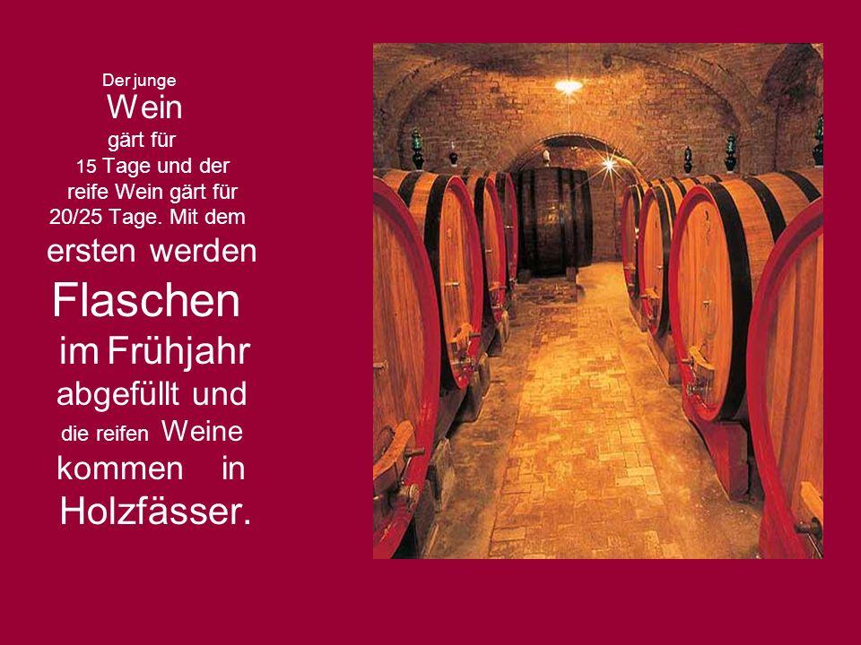 Der junge Wein gärt für 15 Tage und der reife Wein gärt für 20/25 Tage. Mit dem ersten werden Flaschen im Frühjahr abgefüllt und die reifen Weine komm