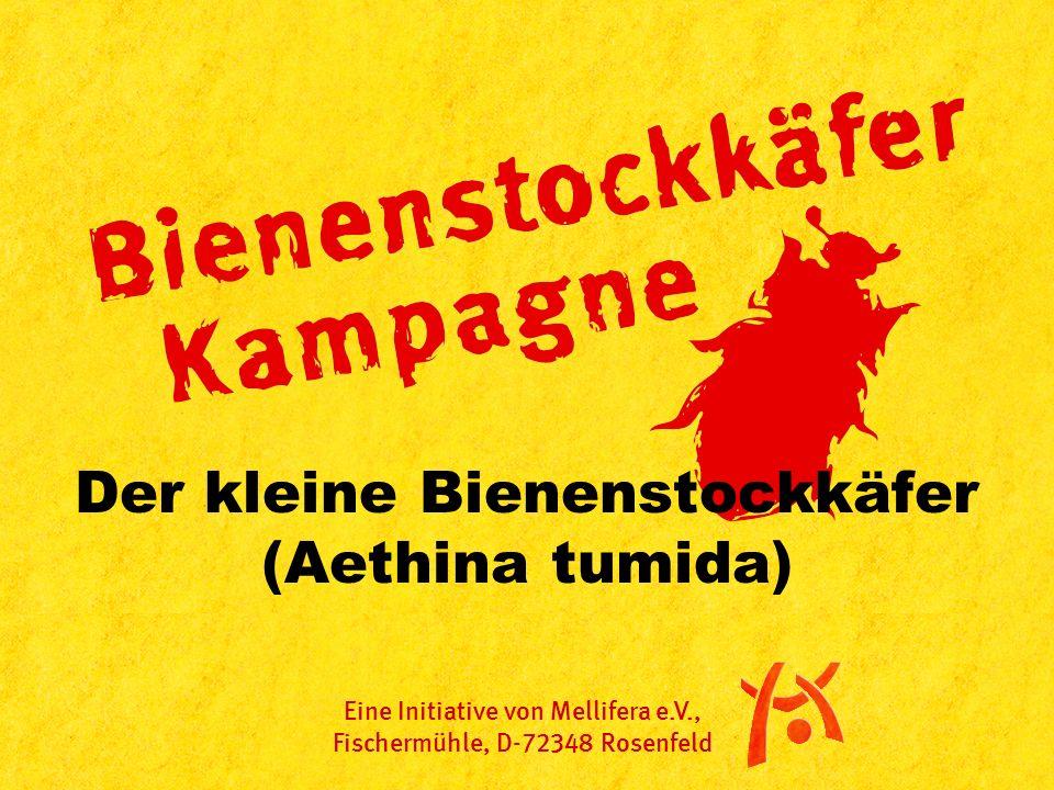Der kleine Bienenstockkäfer (Aethina tumida) Eine Initiative von Mellifera e.V., Fischermühle, D-72348 Rosenfeld