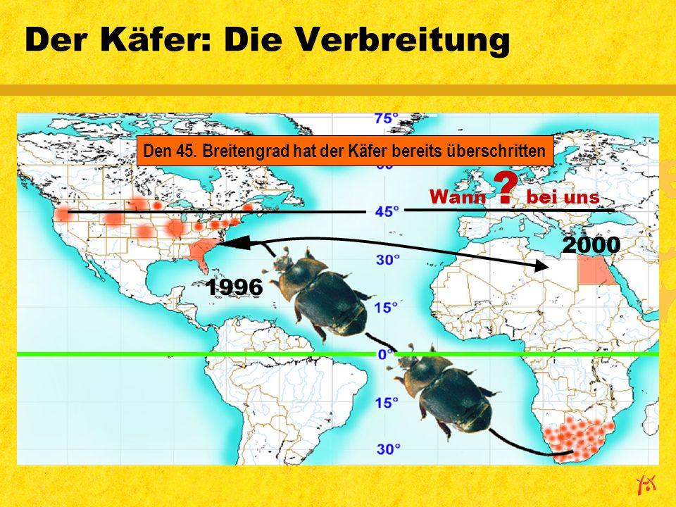 1996 Der Käfer: Die Verbreitung 2000 Wann .bei uns Den 45.