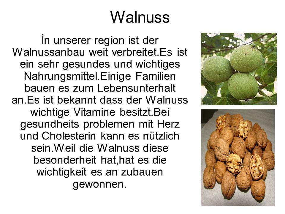 Walnuss İn unserer region ist der Walnussanbau weit verbreitet.Es ist ein sehr gesundes und wichtiges Nahrungsmittel.Einige Familien bauen es zum Lebe